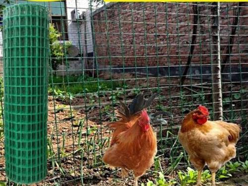 养鸡网围栏